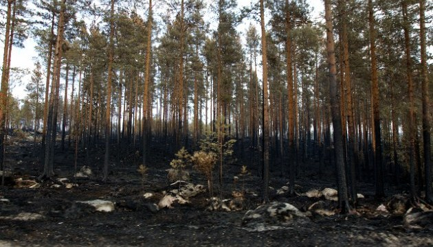 У Швеції згоріли понад 25 тисяч гектарів лісу
