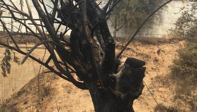 Погибших на пожарах в Греции - уже 92, двух жертв до сих пор не опознали