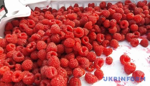 Фестивальний малиновий вихідний на Житомирщині