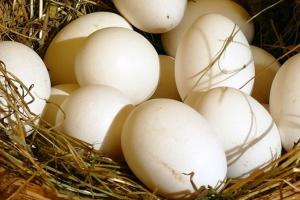 Crece un 3,4% la producción de huevos de aves de corral en Ucrania