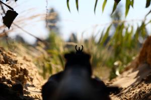 На Донбассе от пуль снайпера погибли два бойца