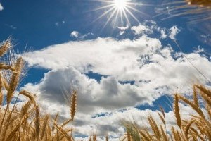 """Украинцам прогнозируют """"горячие"""" +36° и немного дождей"""
