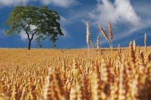 Аномальная жара способствует размножению вредителей на полях – Госпотребслужба