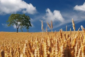 Украине на понедельник прогнозируют жару до 33°, местами - с грозой