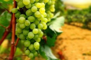 Санкции в действии: виноделы Крыма не могут работать из-за отсутствия тары из Украины
