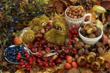 经济发展部:今年乌克兰浆果和坚果出口增长了61.5%