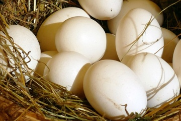 Ukraine gets opportunity to export eggs to Ethiopia – State Service for Food Safety