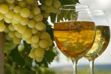 利沃夫将举行葡萄与美酒节