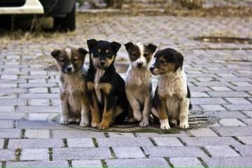 Aujourd'hui marque la Journée internationale du chien