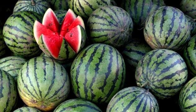 Травневі дощі і червнева спека ідуть на користь херсонським кавунам