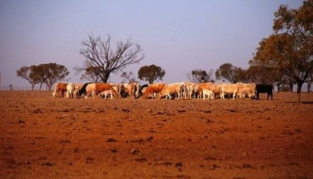 Посуха в Австралії: Уряд виділить $140 мільйонів на допомогу фермерам