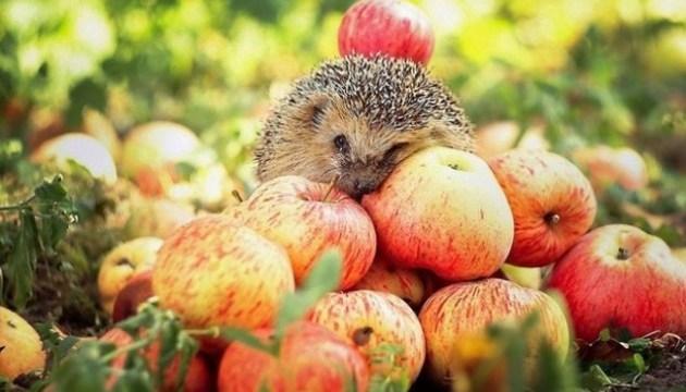 Экспорт яблок из Украины вырос втрое и стал рекордным за 5 лет - эксперты