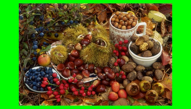 Ukrainian berry and nut exports grow by 61.5%