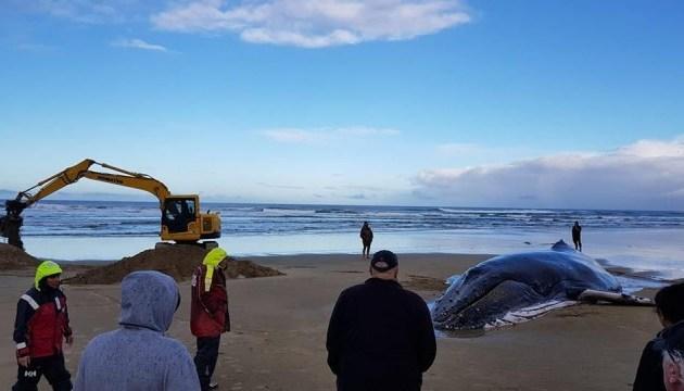 У Новій Зеландії два кити застрягли на березі моря, один загинув