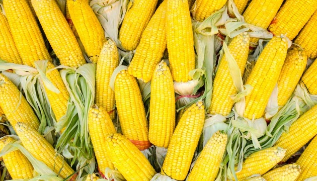 Foreign companies to build corn processing plant in Vinnytsia region
