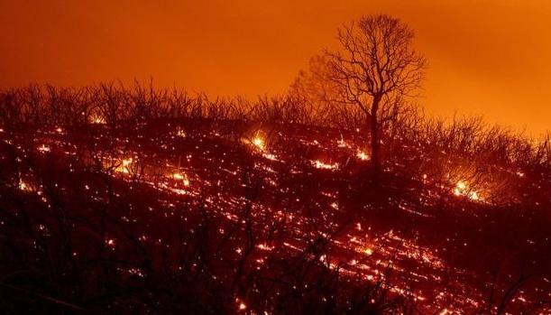 Пожежі в Каліфорнії: у МЗС порадили українцям, куди звертатися в разі небезпеки