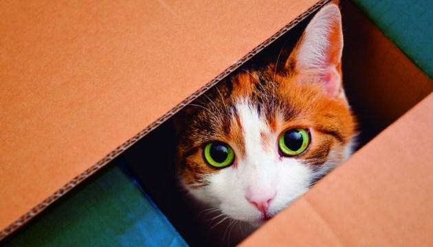 Вчені з'ясували, чому коти так люблять коробки