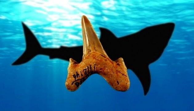 В Австралії знайшли зуби доісторичної мега-акули