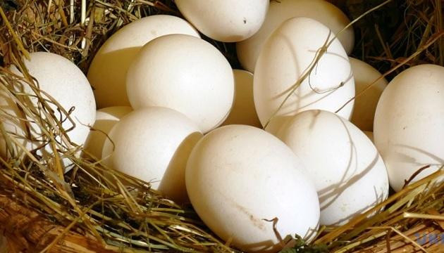 Ucrania obtiene la oportunidad para exportar huevos a Etiopia