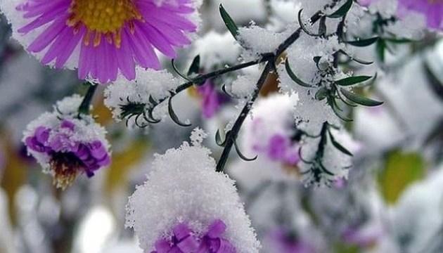 У Грузії випав сніг