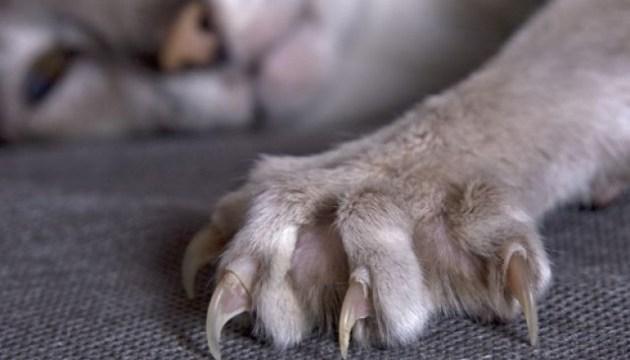 Под Харьковом бешеный кот искусал троих детей
