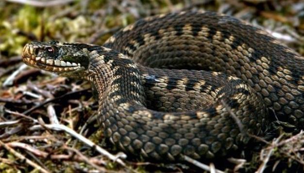 В львовской больнице скончалась 4-летняя девочка, которую три дня назад укусила змея