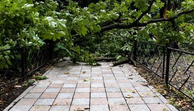 За неделю непогода в Киеве повалила 300 деревьев