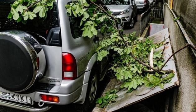 Киевлянам советуют не парковать авто под деревьями