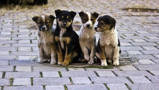 В Киеве впервые проведут Всемирный день бездомных животных