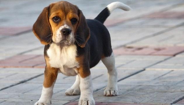Киевляне смогут бесплатно зарегистрировать своих животных