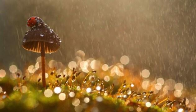 "Синоптики дали ""прогноз дождей"" до середины сентября"