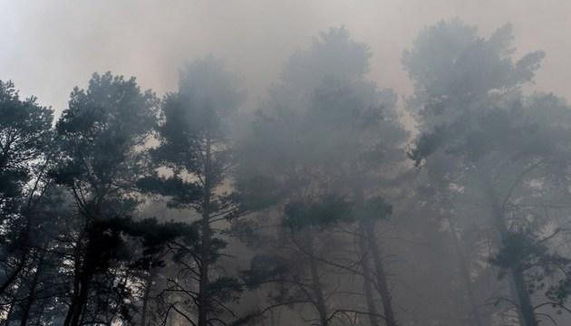 Поліція не виключає підпал лісу біля Берліна