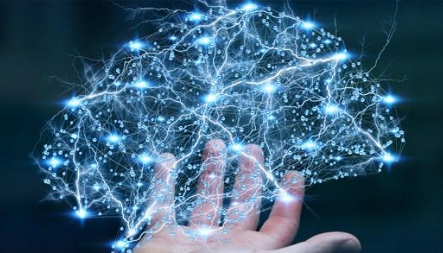 Вчені виявили у корі мозку невідомі раніше