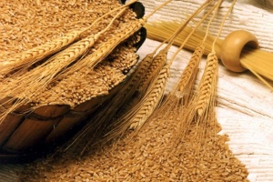 Ukrainian farmers harvest grain and leguminous crops from 63% of area