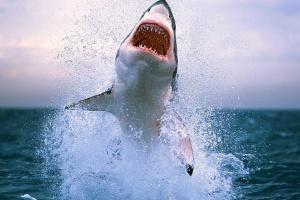 CITES: Країни домовилися посилити захист 18 видів акул