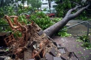 Сильний буревій у Львові забрав життя двох осіб