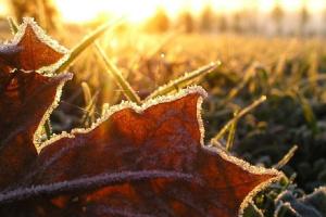 Осінь в Україні набирає обертів: мокрий сніг з дощем та заморозки