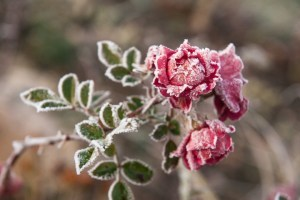"""Від заморозків до +20°: на вихідні обіцяють температурні """"гойдалки"""""""