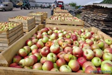 Im vergangenen Jahr importierte die Ukraine etwa eine Million Tonnen Obst