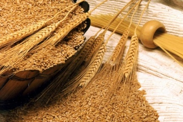 Ukraine exports over 3.7 mln tonnes of grain in July