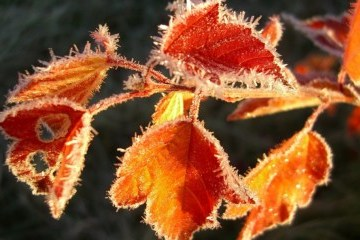 Frosts expected in Ukraine at night