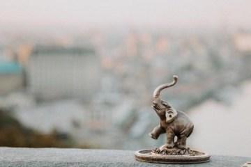 迷你小象现身基辅市中心