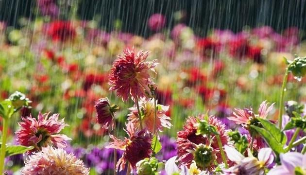 Дожди накроют почти всю Украину, местами грозы