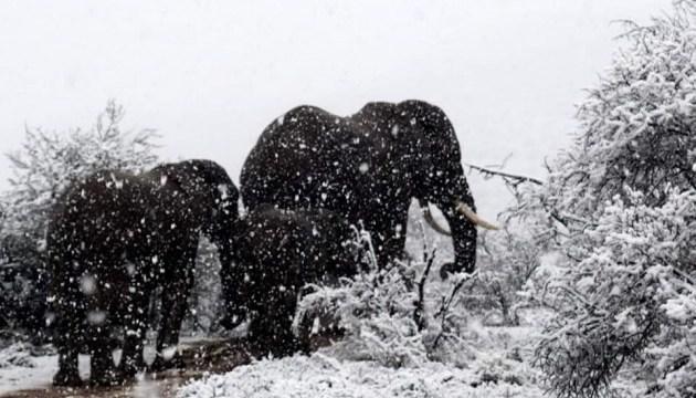 На півдні Африки випав сильний сніг