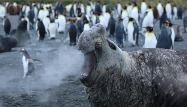 Температура в Антарктиде побила исторический рекорд - 18,3° тепла