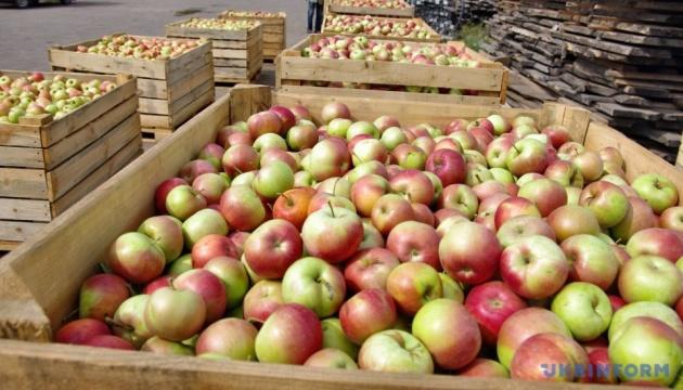 Експерти розповіли, чому з України так мало експортували яблук нового врожаю