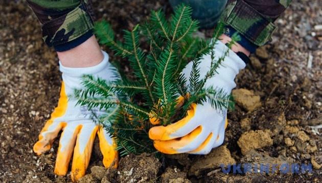 В Україні посилили покарання за незаконну вирубку та знищення лісів