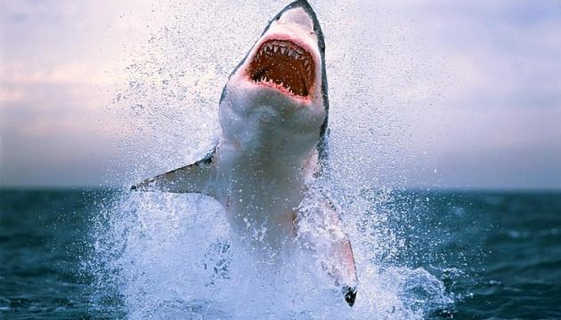 У Канаді голий чоловік стрибнув у акваріум з акулами