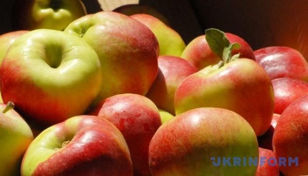 На Прикарпатті шукатимуть найбільше яблуко