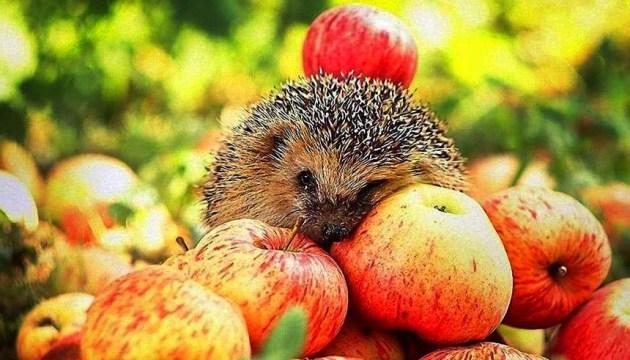 Ви не жили, якщо не цілували щойно впалого яблука...